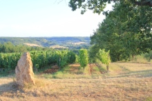 domainedesterresblanches-8