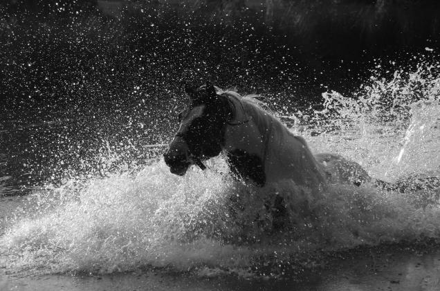 le lot et les chevaux