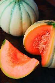 melon du quercy domaine des terres blanches