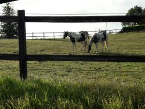 Domaine des terres blanches lot (12)