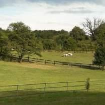 Les chevaux du domaine